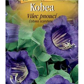 http://www.semena-rostliny.cz/22399-thickbox/cobaea-kobea-vilec-pn-fi.jpg