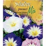 Svlačec pnoucí Tricolor mix