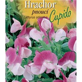 http://www.semena-rostliny.cz/22527-thickbox/lathyrus-odor-hrachor-pn-rl-b-cupido.jpg