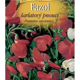 http://www.semena-rostliny.cz/22583-thickbox/phaseolus-coc-fazol-l-arlatov.jpg