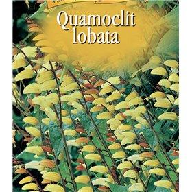 http://www.semena-rostliny.cz/22591-thickbox/quamoclit-l-mina-laloat-ate-lll.jpg
