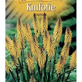 http://www.semena-rostliny.cz/22851-thickbox/kniphofia-uv-kniphofie-lll.jpg