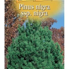 http://www.semena-rostliny.cz/22979-thickbox/pinus-nigra-borovice-atern.jpg