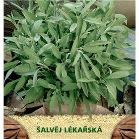 http://www.semena-rostliny.cz/23057-thickbox/tymi-n-obecn-l.jpg