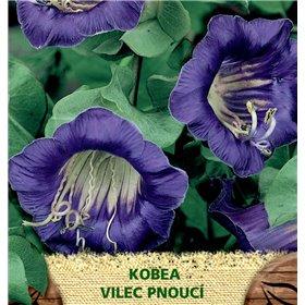 http://www.semena-rostliny.cz/23090-thickbox/cobea-kobea-vilec-pn-fi.jpg