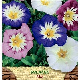 http://www.semena-rostliny.cz/23096-thickbox/convolvulus-tr-svlaatec-n-sm.jpg