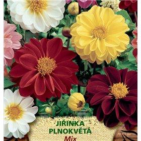 http://www.semena-rostliny.cz/23105-thickbox/dahlia-pinnata-jil-inka-pl-sm.jpg