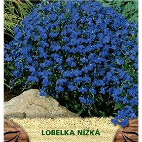 http://www.semena-rostliny.cz/23123-thickbox/lobelia-er-lobelka-mo.jpg
