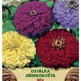 http://www.semena-rostliny.cz/23168-thickbox/zinnia-el-ost-l-jil-sm.jpg