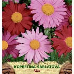http://www.semena-rostliny.cz/23183-thickbox/tanacetum-coc-kopretina-l-ar.jpg