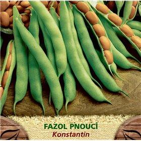 http://www.semena-rostliny.cz/23210-thickbox/fazol-tyat-zel-konstantin.jpg