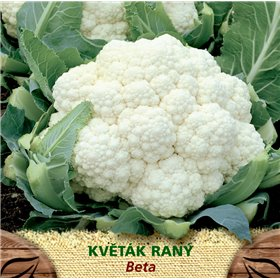 http://www.semena-rostliny.cz/23228-thickbox/kva-t-k-r-beta.jpg
