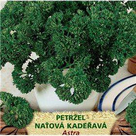 http://www.semena-rostliny.cz/23300-thickbox/petrllel-nal-astra.jpg