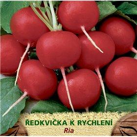 http://www.semena-rostliny.cz/23330-thickbox/l.jpg