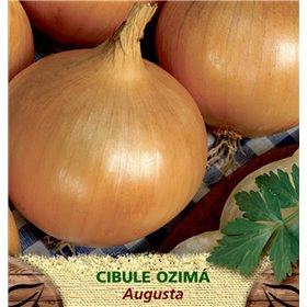 http://www.semena-rostliny.cz/23381-thickbox/cibule-oz-lll-augusta.jpg
