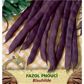 http://www.semena-rostliny.cz/23384-thickbox/fazol-tyat-fial-blauhilde.jpg