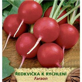 http://www.semena-rostliny.cz/23564-thickbox/l.jpg
