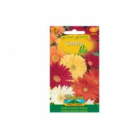 http://www.semena-rostliny.cz/23712-thickbox/gerbera-gerbera-sm.jpg