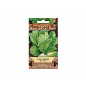 http://www.semena-rostliny.cz/23786-thickbox/sal-t-l-msk-galander.jpg