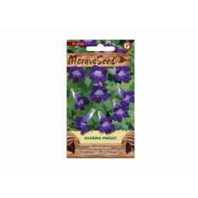 http://www.semena-rostliny.cz/23807-thickbox/asarina-scandens-asarina-fi.jpg