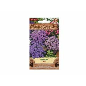 http://www.semena-rostliny.cz/23808-thickbox/brachycome-ibe-vl-elicha-sm.jpg