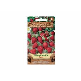 http://www.semena-rostliny.cz/23817-thickbox/jahodn-k-ma-s-atn.jpg