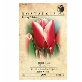Tulipán LUCKY STRIKE 5ks