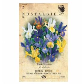 http://www.semena-rostliny.cz/26764-thickbox/iris-hol-kosat-sm-10ks-jpoo.jpg