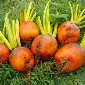 http://www.semena-rostliny.cz/26915-thickbox/repa-burpees-golden.jpg