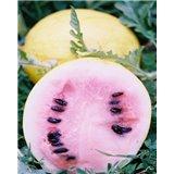 Meloun Golden Midget - zlatý (Citrullus lanatus ) cca 10 semen