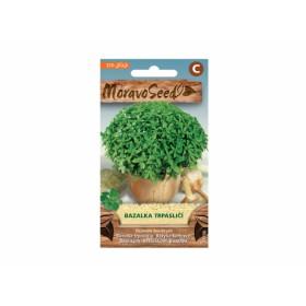http://www.semena-rostliny.cz/27000-thickbox/bazalka-trpasliat-l.jpg
