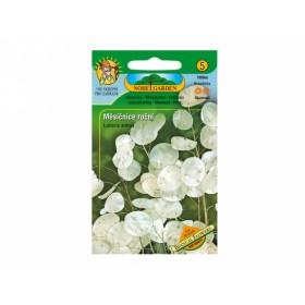 http://www.semena-rostliny.cz/27829-thickbox/měsíčnice-roční-bílá-lunaria-annua.jpg