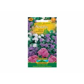 http://www.semena-rostliny.cz/27920-thickbox/nestařec-mix-ageratum-houstonianum-.jpg