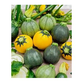 http://www.semena-rostliny.cz/28277-thickbox/cuketa-satelite.jpg