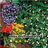 Balkonové letničky - Směs druhů a barev - semena 1 g