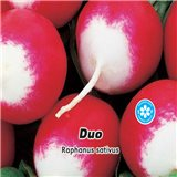 Ředkvička červenobílá  - Duo - semena 5 g