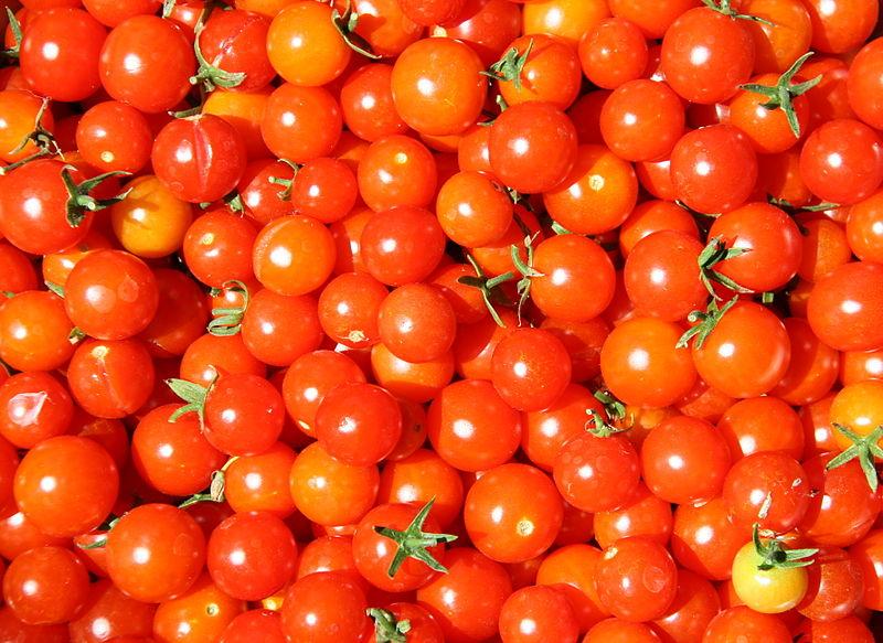cherry rajcata