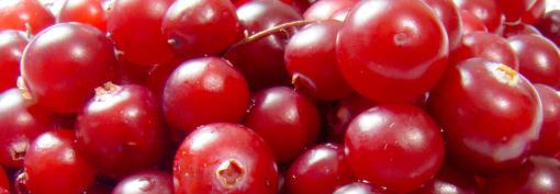 Brusinky jsou vzácné léčivé ovoce, které léčí záněty močového měchýře.