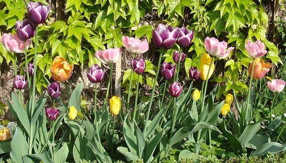 jaro na zahradě probudí květiny