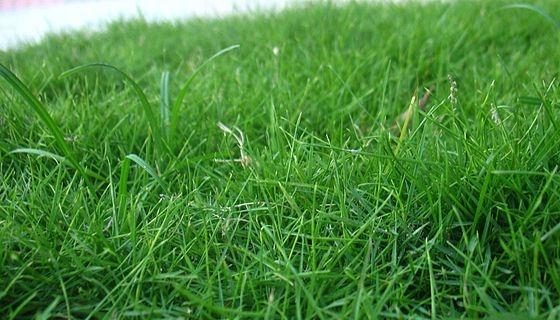 Jaro je tradičně období výsevu trávníku