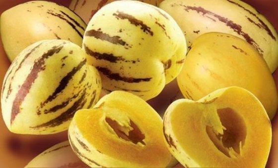 plody pepina