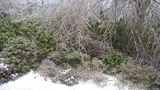 V únoru je práce na zahradě odvislá od počasí.