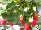 Zahradní kalendář - červen