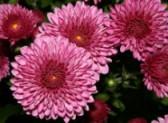 Zahradní kalendář - listopad