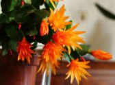 Zahradní kalendář - prosinec