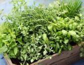 Tipy na bylinky do kuchyně
