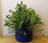 Jak se v zimě starat o pokojové rostliny