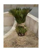Ochrana rostlin proti mrazu