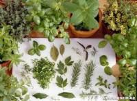 Léčivé rostliny - účinné, užitečné a hlavně léty vyzkoušené