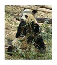 Bambusy pro nedočkavé pěstitele